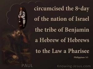 Philippians 3:5 Paul A Hebrews Of Hebrews (brown)
