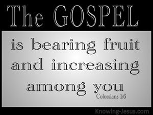 Colossians 1:6 The Gospel Which Has Come To You gray