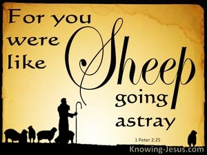 1 Peter 2:25 You Were Like Sheep Going Astray (yellow)