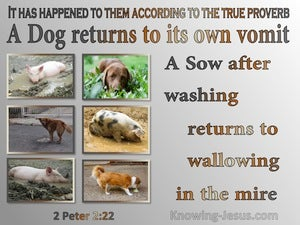 2 Peter 2:22 A Dog Returnsl To Its Vomit A Sow To Mud (gray)