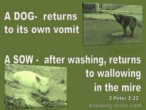 2 Peter 2:22 A Dog Returnsl To Its Vomit A Sow To Mud (green)