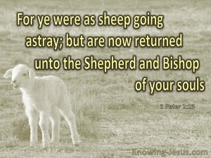 1 Peter 2:25 You Were Like Sheep Going Astray (gold)