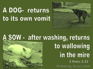 2 Peter 2:22 A Dog Returns To Its Vomit A Sow To Mud (green)