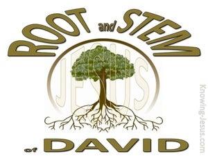 Revelation 22:16 Root and Stem of David (brown)