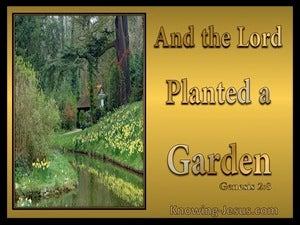 Garden Of Delight (devotional)  (gold) - Genesis 2:8