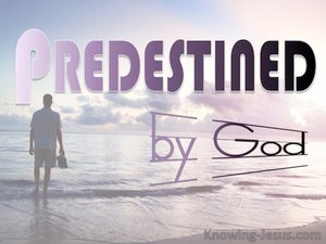 Predestined by God (devotional) (pink) - Romans 8:29