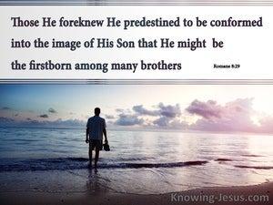 Predestined by God (devotional) (gray) - Romans 8:29