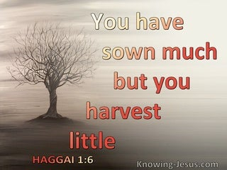 Haggai 1:6 Your Sow Much But Harvest Little (gray)