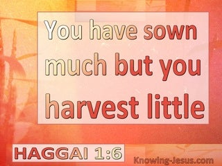 Haggai 1:6 Your Sow Much But Harvest Little (white)
