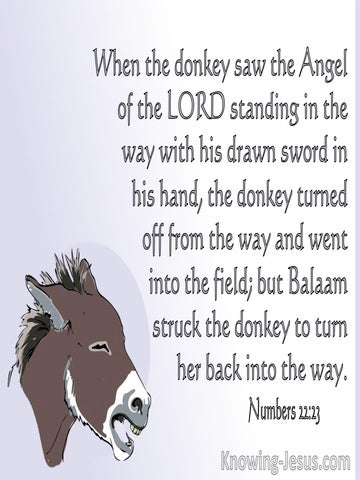 Numbers 22:23 The Donkey Saw The Angel Of The Lord (white)