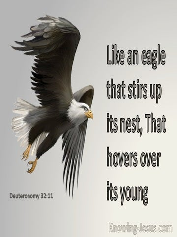 Deuteronomy 32:11 Like An Eagle The Stirs Up Its Nest (gray)