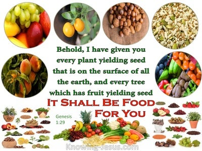 Genesis 1:29 It Shall Be Food For You (white)