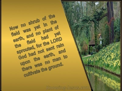 Genesis 2:5 Now There Was No Man To Cultivate The Ground (gold)