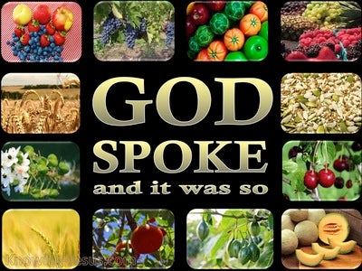 Genesis 1:11 Let The Earth Sprout Vegetation (black)