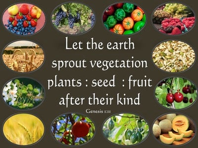 Genesis 1:11 Let The Earth Sprout Vegetation (brown)
