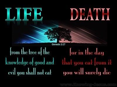 Genesis 2:17 Tree Of Knowledge Of Good And Evil (aqua)