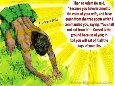 Genesis 3:17 Because You Have Eaten Of The Tree (yellow)