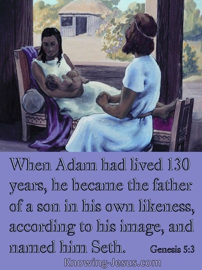 Genesis 5:3 Adam Was The Father Of Seth (purple)