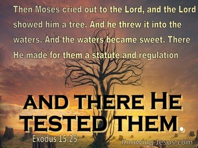 Exodus 15:25 the Lord showed him a tree (brown)