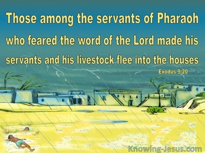 Exodus 9:20 Some Of Pharoah's Servants Feared God (yellow)