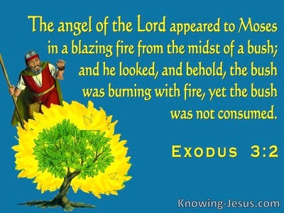 Exodus 3:2 The Angel Of The Lord Appeared To Moses In The Burning Bush (blue)
