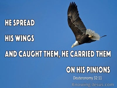 Deuteronomy 32:11 Like An Eagle The Stirs Up Its Nest (blue)