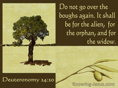 Deuteronomy 24:20 It Shall Be For The Alien The Orphan The Widow (sage)