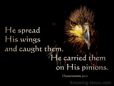 Deuteronomy 32:11 Like An Eagle The Stirs Up Its Nest (black)