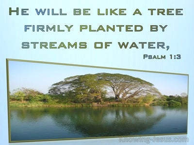 Psalm 1:3 He Will Be Like A Tree Planted By Streams Of Water (aqua)