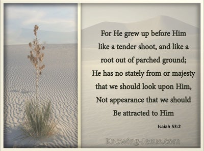 Isaiah 53:2 He Grew Up Like A Tender Shoot (gray)