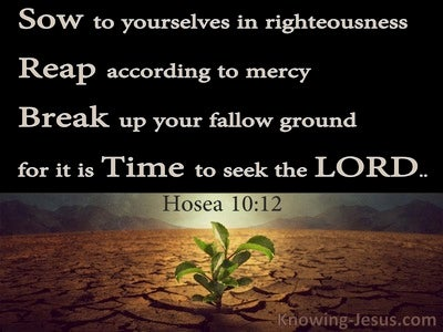 Hosea 10:12 Break Up Your Fallow Ground It Is Time To Seek The Lord (black)