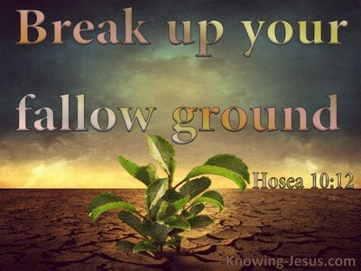 Hosea 10:12 Break Up Your Fallow Ground It Is Time To Seek The Lord (brown)