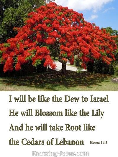 Hosea 14:5 Like Refreshing Dew To Israel (white)