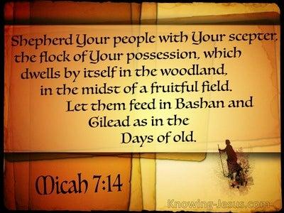 Micah 7:14 Shepherd Your People (brown)