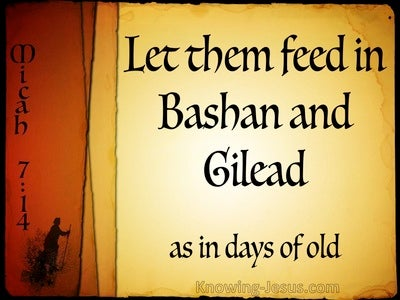 Micah 7:14 Shepherd Your People (yellow)