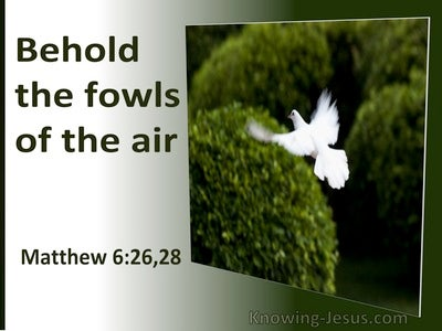 Matthew 6:26 Behold The Fowls of The Air (utmost)05:18
