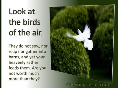 Matthew 6:26 Look At The Fowls of The Air Whey Do No Sow (green)