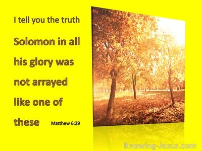 Matthew 6:29 Solomon In His Glory Was Not Arrayed Like ONe Of These (yellow)