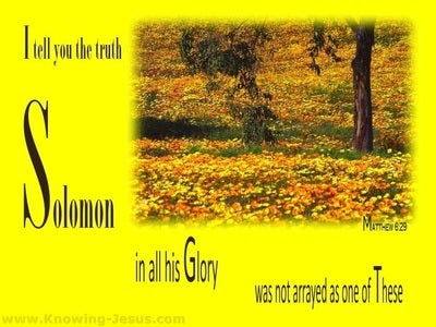 Matthew 6:29 Solomon In All His Glory (yellow)