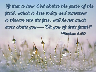 Matthew 6:30 If God So Clothe The Grass Will He Not Much More Clothe You Ye Of Little Faith (blue)