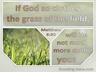 Matthew 6:30 If God So Clothe The Grass Will He Not Much More Clothe You (sage)