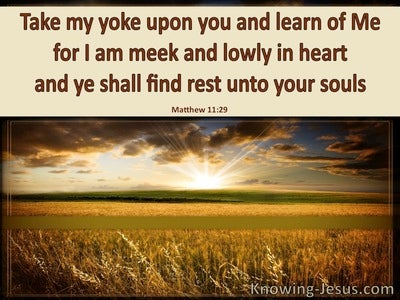 Matthew 11:29 Take My Yoke Upon You (brown)