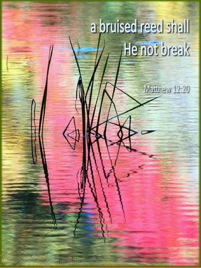 Matthew 12:20 A Bruised Reed He Will Not Break (pink)