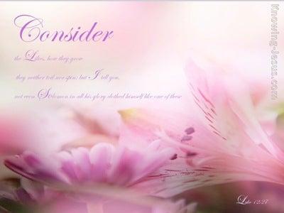 Luke 12:27 Consider the Lilies (pink)