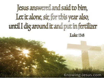Luke 13:8 Let It Alone For This Year Also (green)