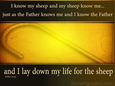 John 10:15: I Know My Sheep (yellow)