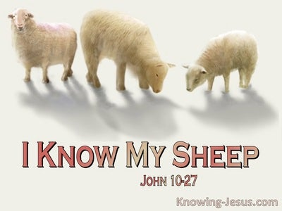 John 10:27 My Sheep Hear My Voice (pink)
