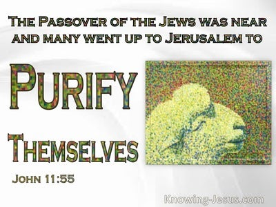 John 11:55 The Passover Of The Jews : To Purify Themselves (white)