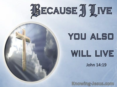John 14:19 Because I Live You Will Also Live (windows)01:12