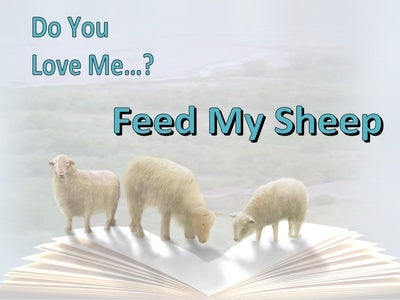 John 21:16 Do You Love Me Feed My Sheep (white)